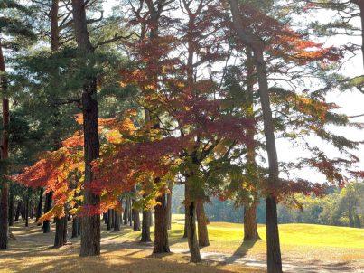 東IN15番の紅葉の様子